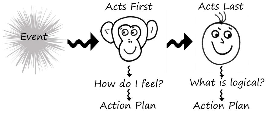 Chimp-Process